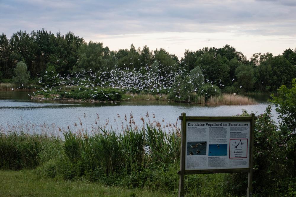 Vogelinsel im Bernsteinsee bei Ribnitz-Dammgarten